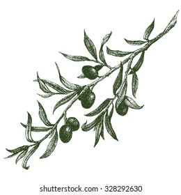 vector illustration of the olive branch, olive festival in Spain, olive oil,graphics