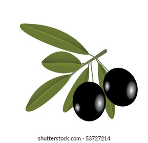 Vector illustration of the olive on the branch over the white background