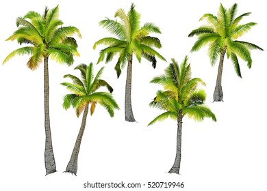 Vector illustration on a graphic tablet. Hand drawing.Two palm trees, branches of palm trees made of gradient.