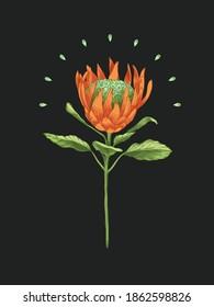 Vector illustration of orange magic flower on dark background. Vintage and modern postcard. Magic print.