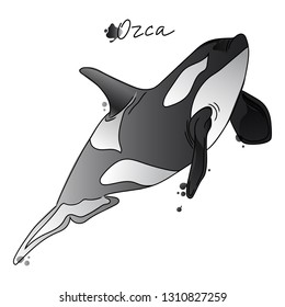 Vector illustration of orca. Sketch. Watercolor. Isolated on white background. Black outline.