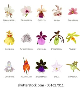 A vector illustration of orchid icon sets