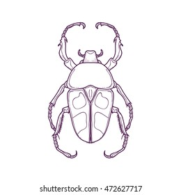 Vector Illustration of Outline Beetle Bug Insect Hand Drawn for Coloring, Jumnos ruckeri