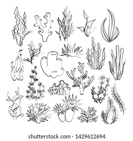 Vector illustration of outline seaweeds, planting, marine algae and ocean corals silhouettes. Underwater hand drawn plants for aquarium decor. Isolated set on white background. Nature seaweed marine