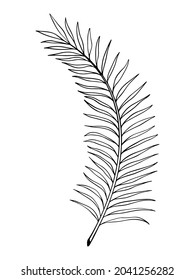 Vector illustration of outline tropical leaves. Black and white hand-drawn outline of a palm branch.