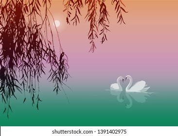 vector illustration with a pair of swans on a pond under willow branches