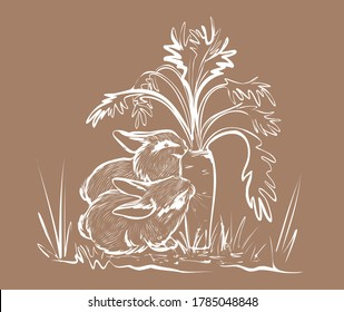 Vector illustration. A pair of white rabbits are eating a large carrot. Sketch by hand with a pen.