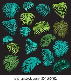 vector illustration of  palm leaf set