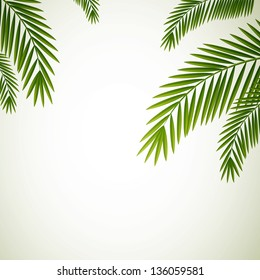 Vector Illustration of Palm Leaves on White Background