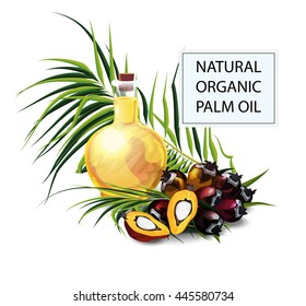 Vector illustration. Palm oil fruits. Soap and food manufacture. Small bottle with oil. Seed of oil palm