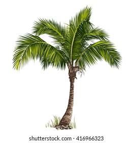 Vektor illustrasjon av palmen