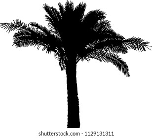 Vector illustration of palms tree silhouette, black on white background