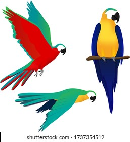 vector illustration of parrot in three positions: sitting on a branch and flying with wings stretched in the sky and pointing downwards
