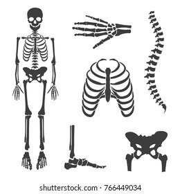 Vector illustration parts of human skeleton. Human joints vector set. Skull, hip bone, chest, spine, hand skeleton and foot bone symbols. Rehabilitation