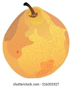vector illustration of a pear