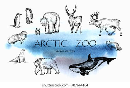 Vector illustration. Pen drawn arctic animals set: penguins, polar bears, walrus, seal, polar fox, reindeers, orca whale. Vector sketched objects.