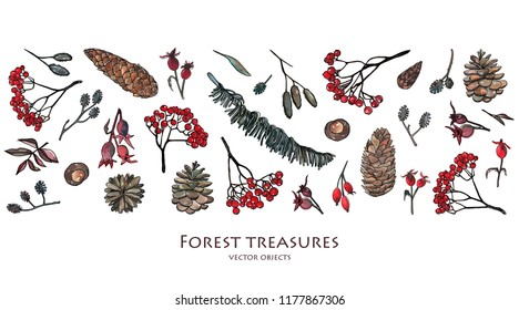 Vector illustration. Pen sketch with watercolor style background . Nature elements, forest treasures. Leaves, ash branches, pine cone, rose hips.