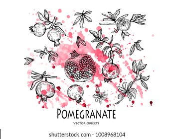Vector illustration. Pen style vector pomegranate set. Pomegranates, cut pomegranate, branches and leaves. Watercolor background.
