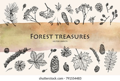 Vector illustration. Pen style sketch. Nature elements, forest treasures. Leaves, ash branches, pine cone, rose hips.