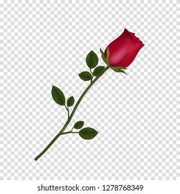 Vector illustration of photo-realistic, highly detailed flower of red rose isolated on transparent background. Beautiful bud of red rose on long stem. Clip art for valentines, love, wedding, design.
