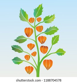 A vector illustration of a physalis.
