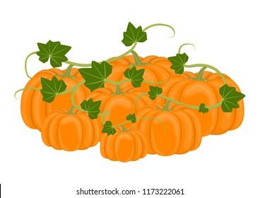 Vector illustration. Pile autumn pumpkins on white background.