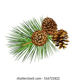 Vector illustration. Pine tree branch. New Year decor. Winter holidays design elements.Pine cone.