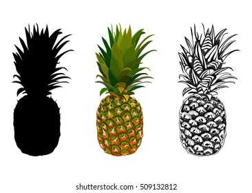 Vector illustration of pineapple. Silhouette pineapple. Tropical background