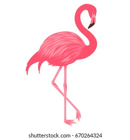 Vector illustration of pink flamingo. Isolated on the white background. Exotic tropical bird.