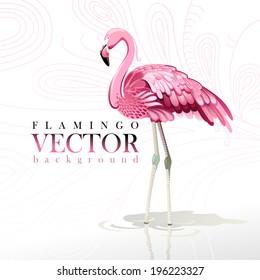Vector illustration of pink flamingos