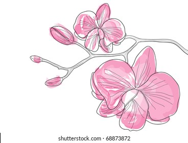 Vector illustration of pink orchid flowers