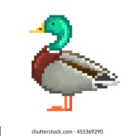 Vector illustration, pixel art drake isolated on white background. Waterfowl male duck standing on the ground.