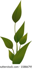 Vector illustration of a plant