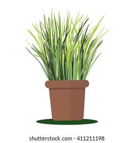 Vector illustration plant in pot. Grass