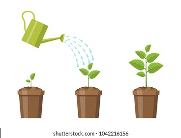 Vector illustration. Plant tree stages.