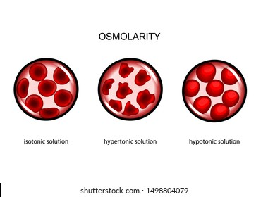 vector illustration of plasma osmolarity. isotonic, hypertonic and hypotonic solutions