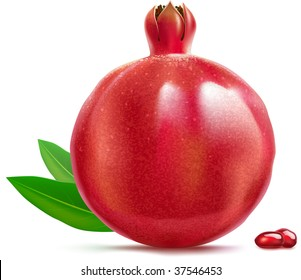 Vector illustration of pomegranate. Highly detailed, contains gradient mesh elements.