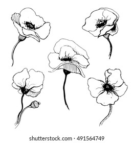 Vector illustration with poppy in black and white colors. Elegant floral element for design. It can be used for decorating of invitations, greeting cards, decoration for bags, t-shirt, cover, tattoo