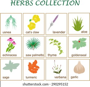 vector illustration of popular herbs collection.