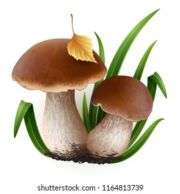 Vector illustration - Porcini mushrooms set Isolated on white background. EPS 10
