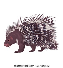 Vector Illustration Porcupine Isolated