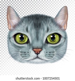 Vector illustration portrait of Abyssinian cat. Cute realistic cartoon face of blue color cat for print on pillow.