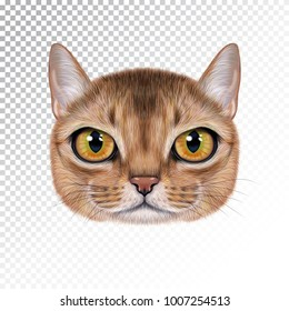 Vector illustration portrait of Abyssinian cat. Cute realistic cartoon face of sable color cat for print on pillow.