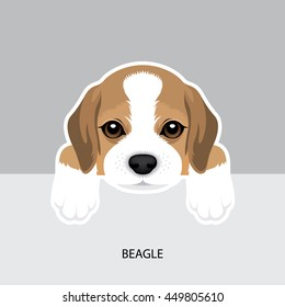 Vector Illustration Portrait of Beagle Puppy. Dog isolated.