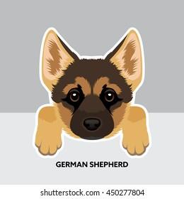 Vector Illustration Portrait of German Shepherd Puppy. Dog isolated