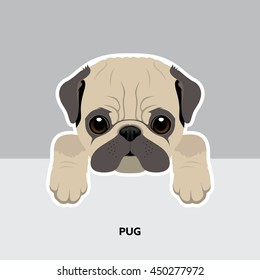 Vector Illustration Portrait of Pug Puppy. Dog isolated