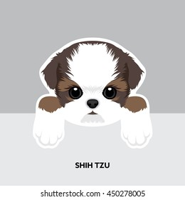 Vector Illustration Portrait of Shih Tzu Puppy. Dog isolated