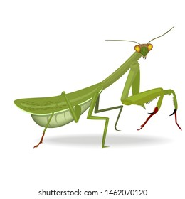 Vector Illustration of a praying mantis or grass hopper