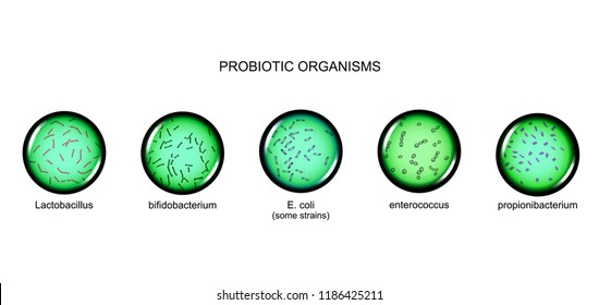 vector illustration of probiotic microorganisms, magnification under a microscope