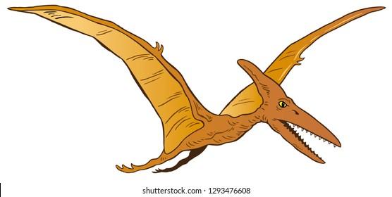 Vector illustration of Pterodactyl dinosaur